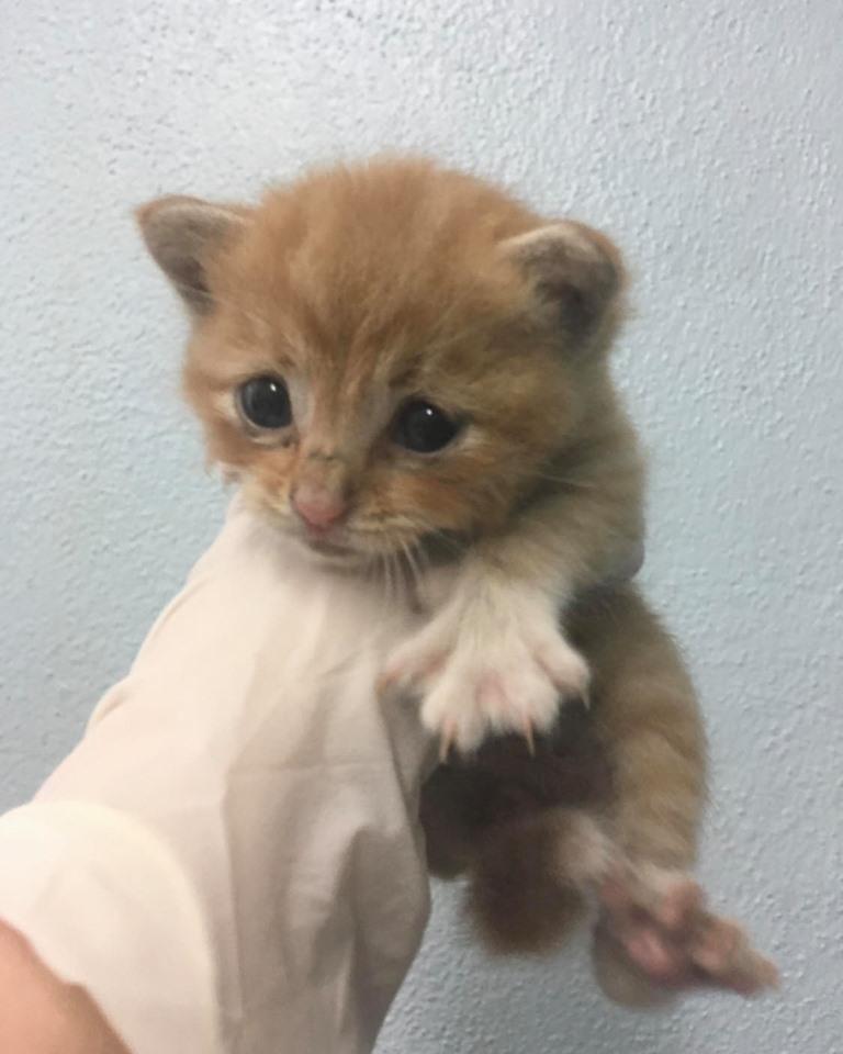 healthy kitten