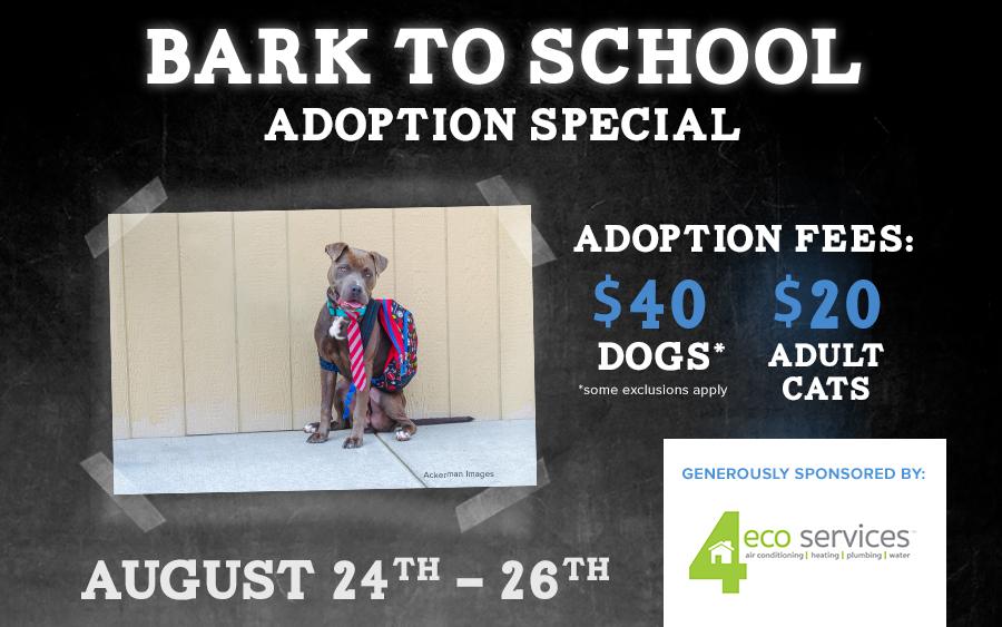 Bark to School adoption special