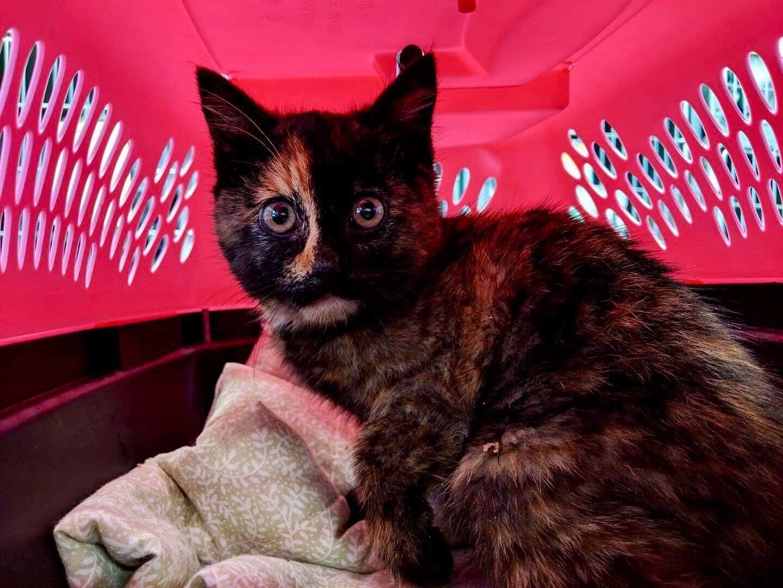 ridekc kitten