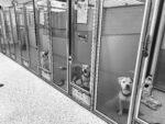 kc pet project at capacity