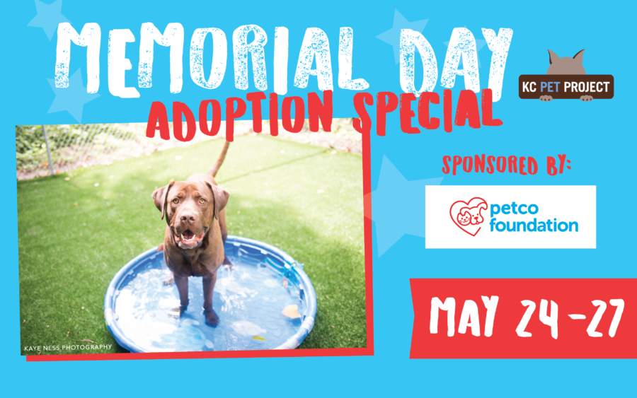 memorial day special kc pet project