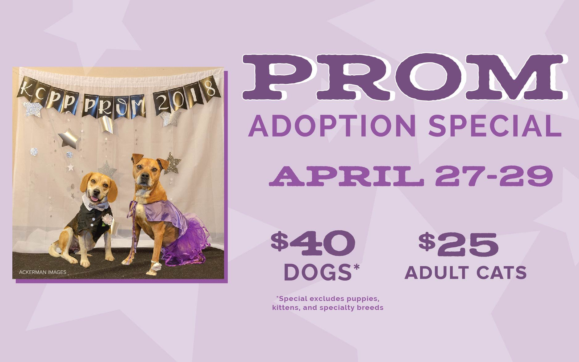 Prom Adoption Special
