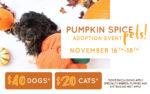 pumpkin-spice-pets