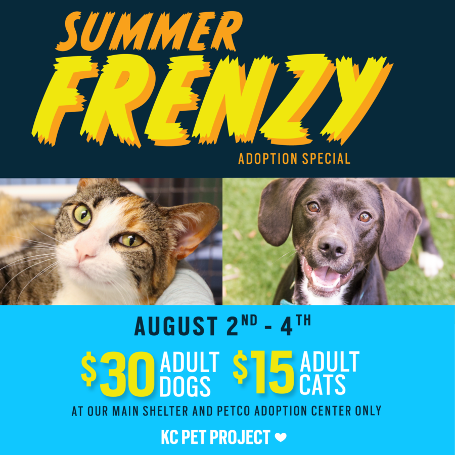 Summer Frenzy Adoption special
