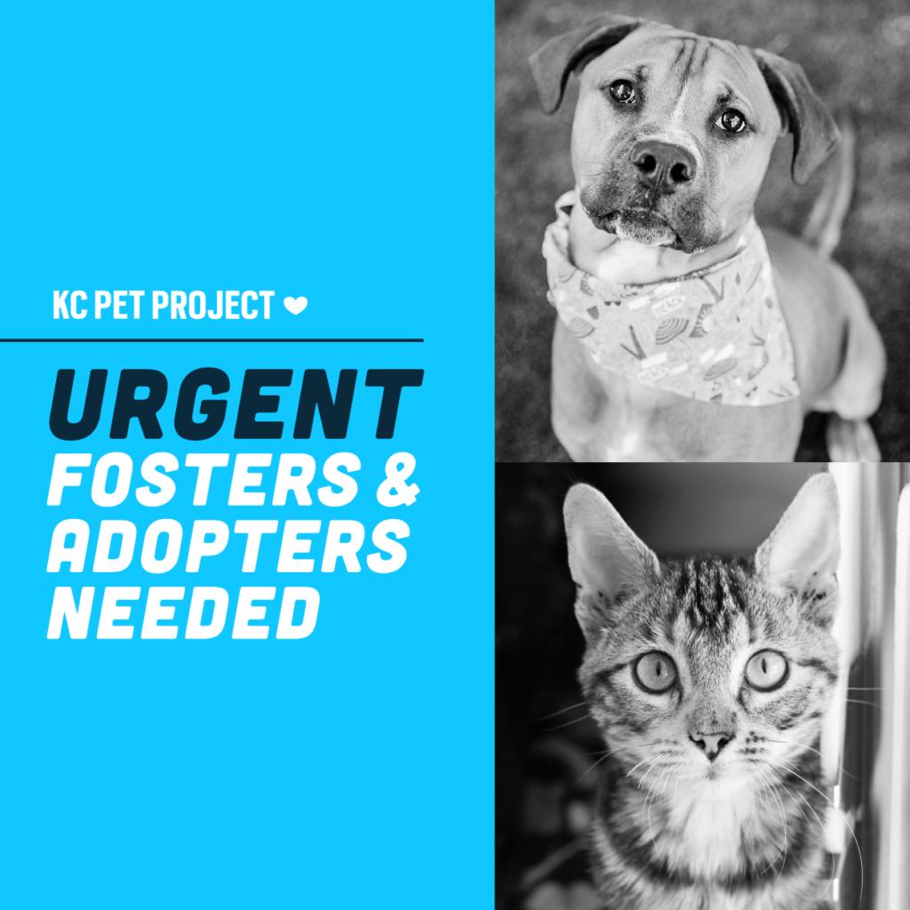 urgent fosters needed