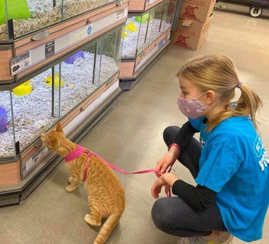 Petco Cat Habitat Program