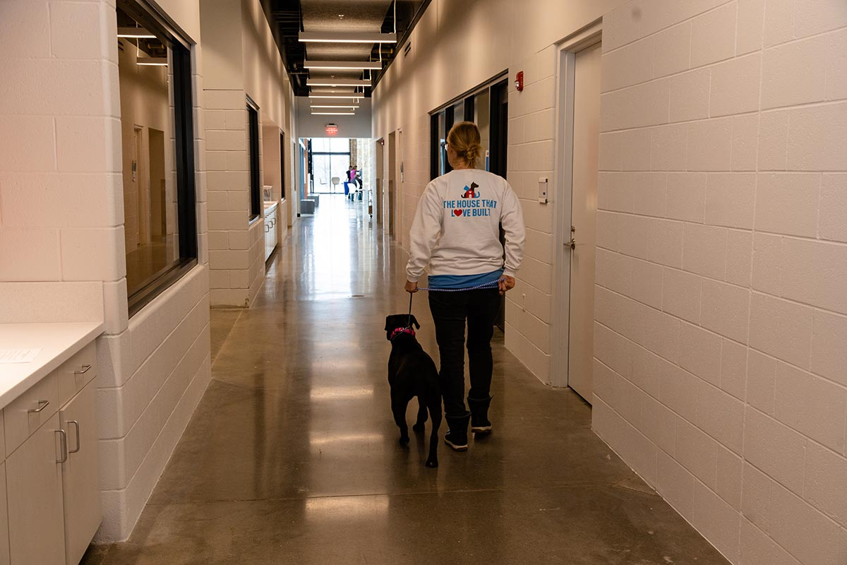 KC Pet Project dog going for a walk at KCCAC