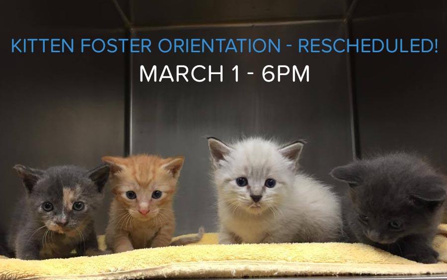 kitten-orientation-new-date