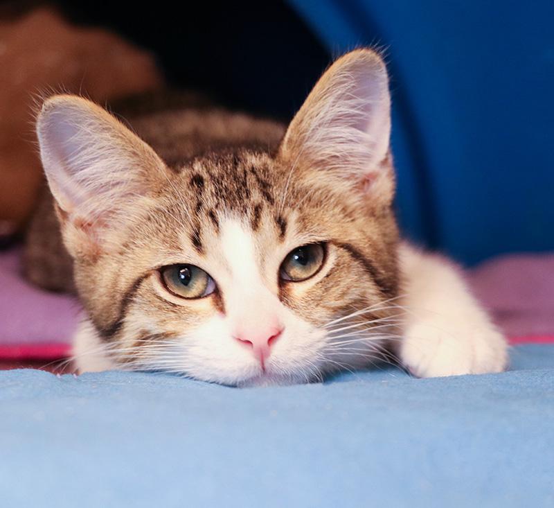 Kitten Snuggle Service