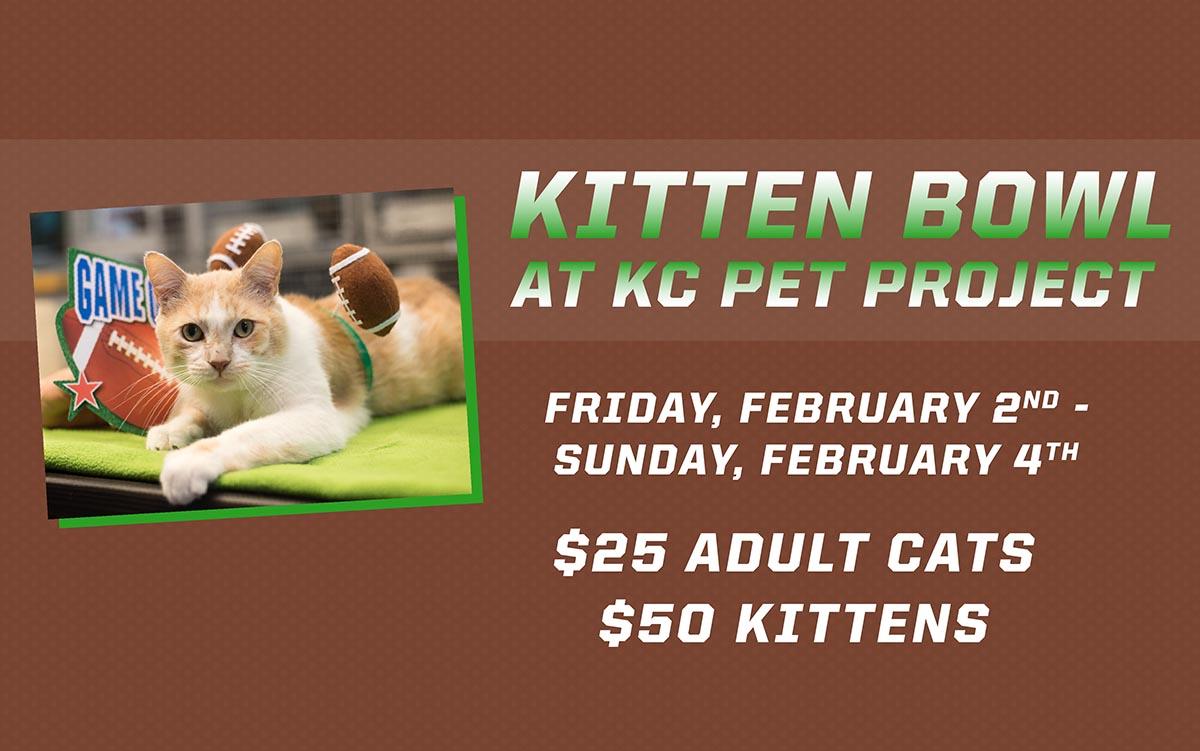 kitten-bowl-2018