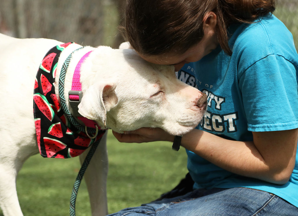 Volunteer at KC Pet Project